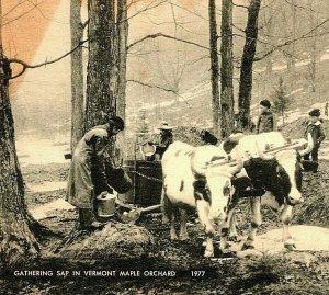Gathering Sap In Vermont Maple Orchard Vtg Postcard American Art 1948 Cancel