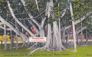 Great Banyan Tree Edeison Winter Home Fort Myers Florida