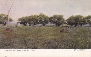 Evangeline Well and Willows,  N.S.,  Canada,  00-10s