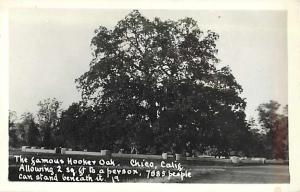 RPPC The Famous Giant Hooker Oak in Chico, CA California,  EKC Real Photo