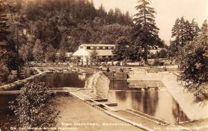 Bonneville Oregon Fish Hatchery Real Photo Antique Postcard K36036