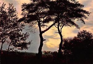 Graphilux Tournai Trees Sunset Landscape