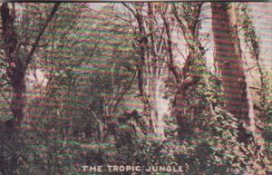 Trees The Tropic Jungle Uganda Colonel Roosevelt's Hunting Grounds 1910 Roose...
