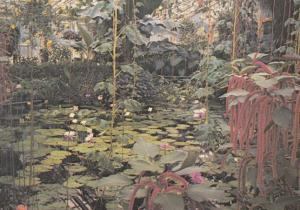 Water Lily House at the Kew Gardens Nymphae Plants Painting Postcard