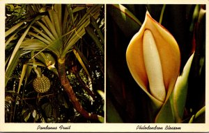 Florida Tropical Plants Pandanus Fruit and Philodendron Blossom