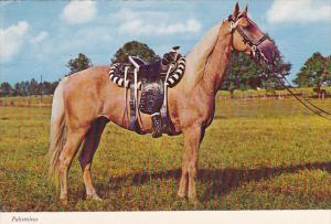 Beautiful Palomino With Saddle