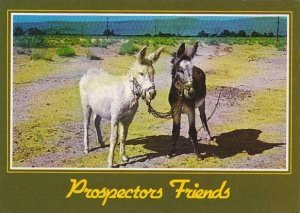 Donkeys Prospectors Friends