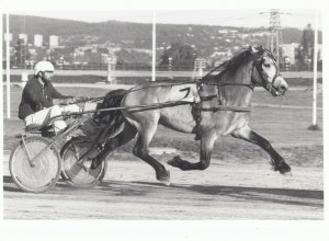 RP; OSLO, Norway, 1970-80s; Harness Horse Racing, ATOM VINTER