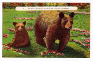 Pocono Mountains PA Bear & Cub A Couple of the State's First Settlers Postcard