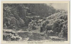 New Zealand's Crystal Mountain Streams, Finest Lamb In The World PPC, c 1920