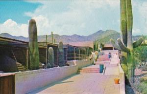 Arizona Tucson Sonora Desert Museum