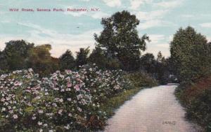 New York Rochester Wild Roses Seneca Park