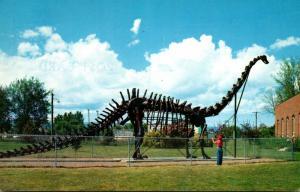 Utah Vernal Diplodocus Dinosaur Sekeleton Utah Field Museum Of Natural Histor...