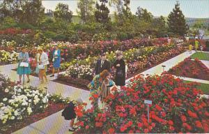 California Whittier Pageant Of Roses Garden Rose Hills Memorial Park