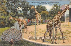 Brookfield, IL, USA Giraffes, Chicago Zoological Park Postcard Post Card 1946...