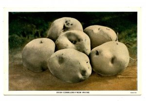 ME - Irish Cobblers Potatoes