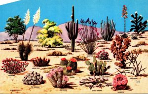 Ariona Cactus and Desert Flore Of The Great Southwest