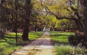 Litchfield Plantation Georgetown County South Carolina