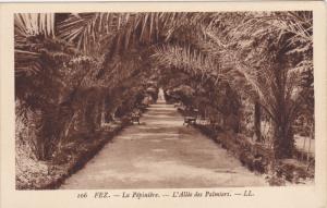 Fez, La Pepiniere, L' Allee des Palmiers, Morocco, 10-20s