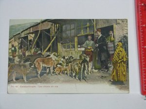 Postcard Turkey Constantinople Dogs Great Britain Stamp BPO US Postage Due