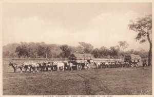 Australian Bullock Teams , wool teams on the road , Australia , 1910s