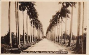 Cuba Havana Avenue Royal Palm Avenida de Palmas Key Real Photo