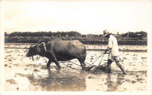 Hawaii~Farmer Cultivating Field w Water Buffalo~c1930 RPPC-Postcard