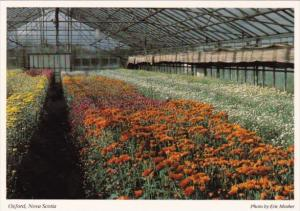 Canada Greenhouse With Beautiful Flowers Oxford Nova Scotia