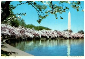 1970's Washington Monument From Across The Pool Washington D.C. PC1975