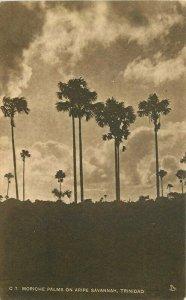Aripe Savannah Caribbean Moriche Palms C-1930s C-7 Postcard 21-6389