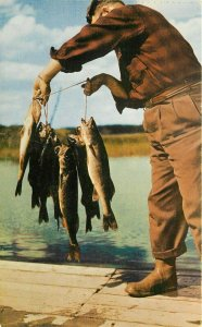 Walleye Pike Fisherman Great Lakes Region Postcard