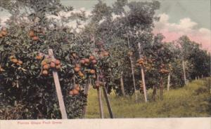 Florida Grape Fruit Grove