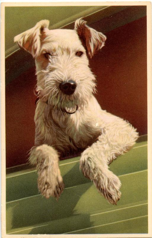 Dog -  Wire-Haired Terrier