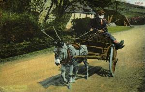 ireland, Irish Peat Transport by Donkey Cart (1945)
