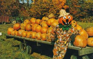Pumpkin Man at Halloran's Pumpkinville - Great Valley NY, New York - Roadside