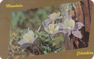 Flowers Mountain Columbine