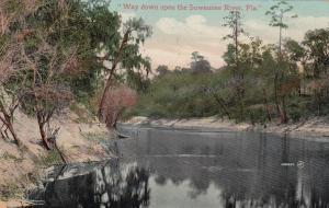 SUWANNEE River , Florida , 1909