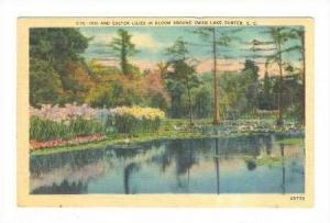 Iris flow, Orangeburg, South Carolina, PU-1942