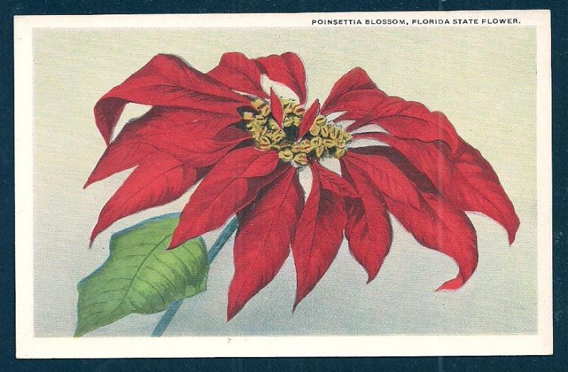 Poinsettia Blossom Florida State Flower unused c1920's
