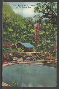 Puerto Rico, El Yunque - Natural Pool - Tropical Beauty