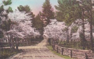 North Carolina Southern Pines Springtime Albertype