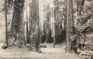 RP: MUIR WOODS, California, 1930-40s ; Cathdral Grove ; ZAN 851