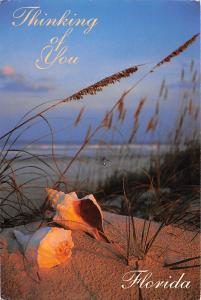 USA Florida's Beautiful dunes Sea Oats Shells Thinking of You