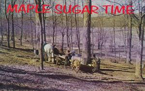 Pennsylvania Somerset County Gathering Sugar Water In Early Spring Maple Suga...