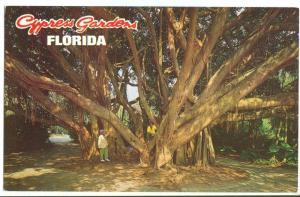 Cypress Gardens, Florida, The Banyan Tree, unused Postcard