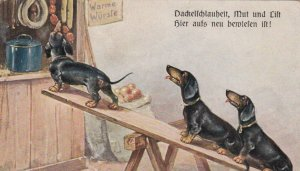 Dachshund dogs use board to get food , 00-10s