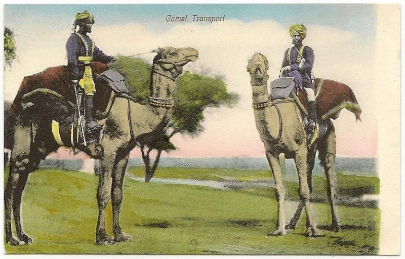 India Camel Transport vintage Multicolor postcard