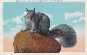Pennsylvania Harrisburg Billy One Of The Pet Squirrels In Capitol Park 1926
