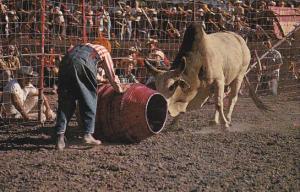 Canada Subdoing Wild Brahma Bull Calgary Stampede Calgary Alberta