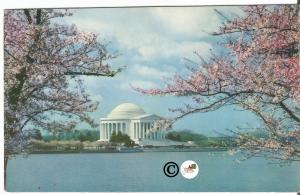 Jefferson Memorial in Spring Beautiful Pink Blossoms Vintage Postcard